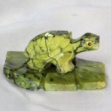 Schildkröte auf Blatt